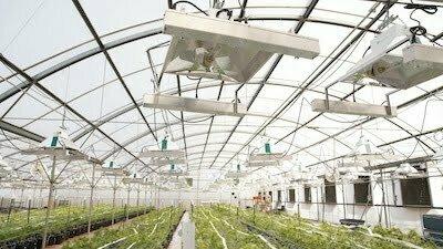 horticultural grow light
